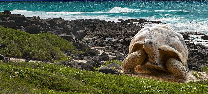 Erlebniskreuzfahrten, Kreuzfahrten Galapagos, Expeditionskreuzfahrten